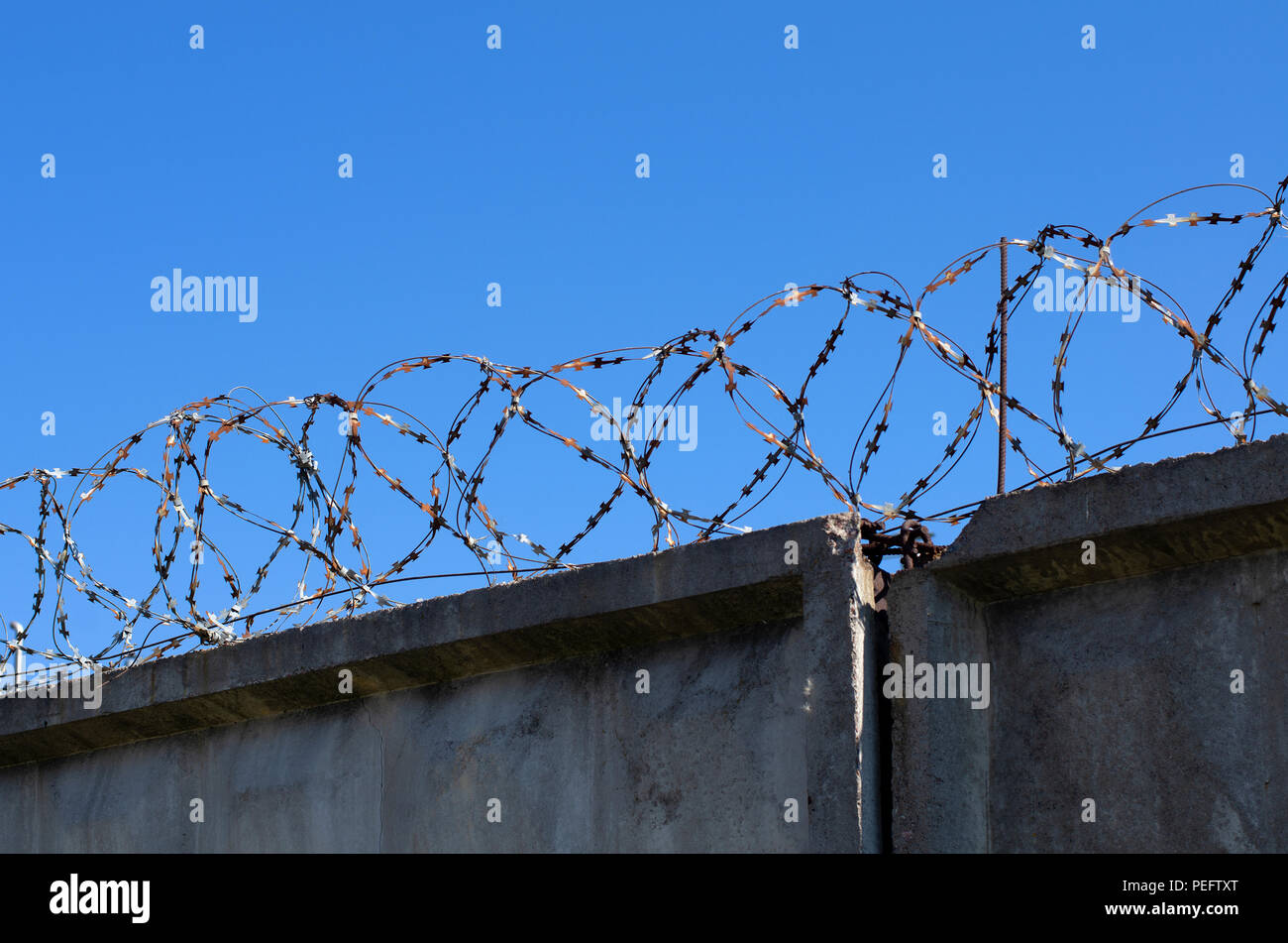 Coils of barbed wire with spikes over the concrete fence in the background blue sky - Stock Image