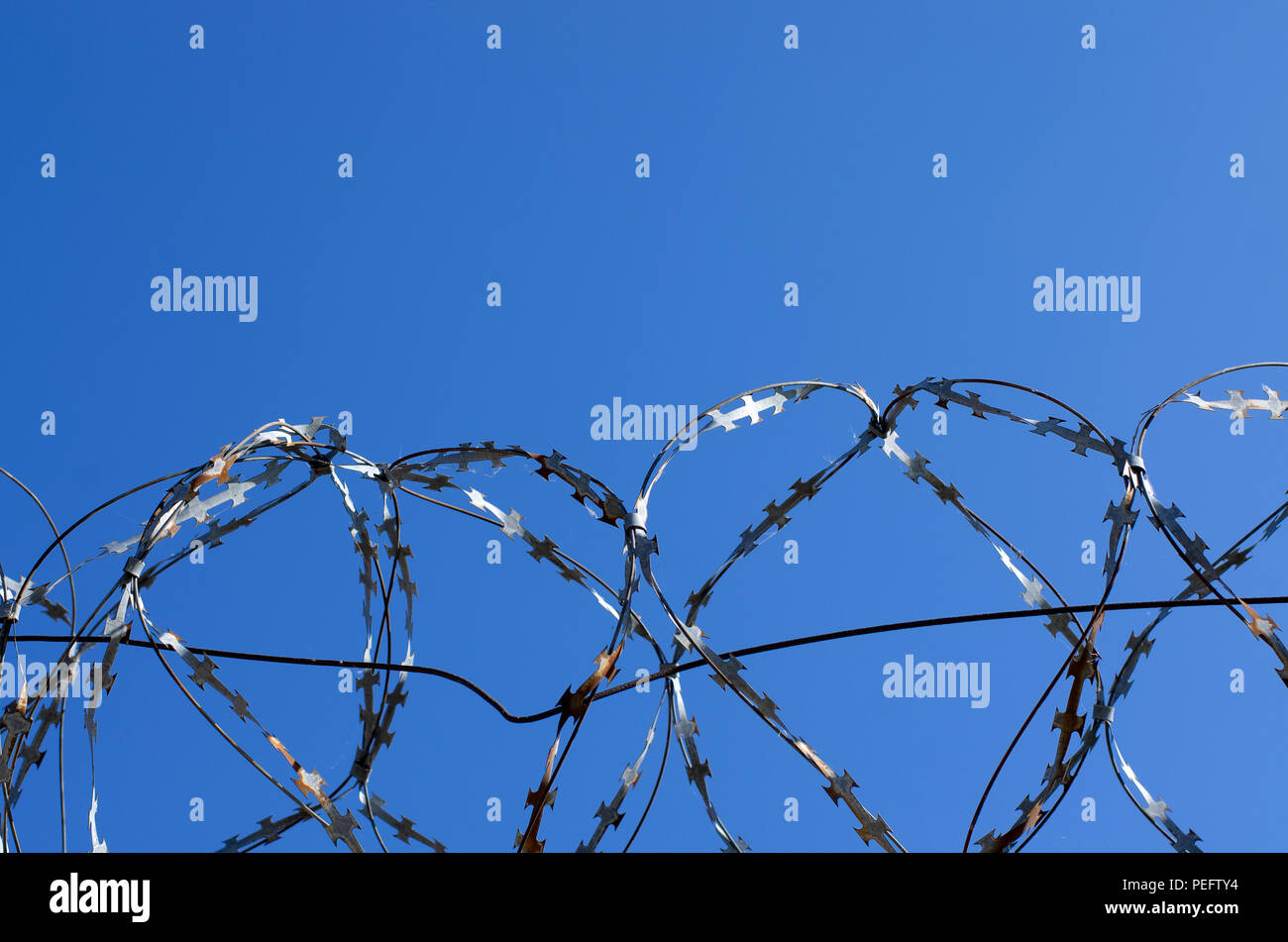 Coils of barbed wire with spikes over the concrete fence closeup - Stock Image