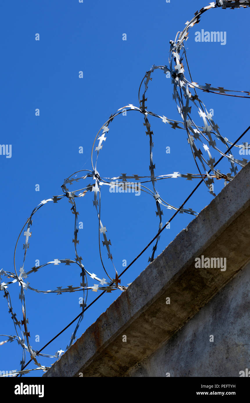 Coils of barbed wire with spikes on a concrete fence in a vertical position closeup - Stock Image