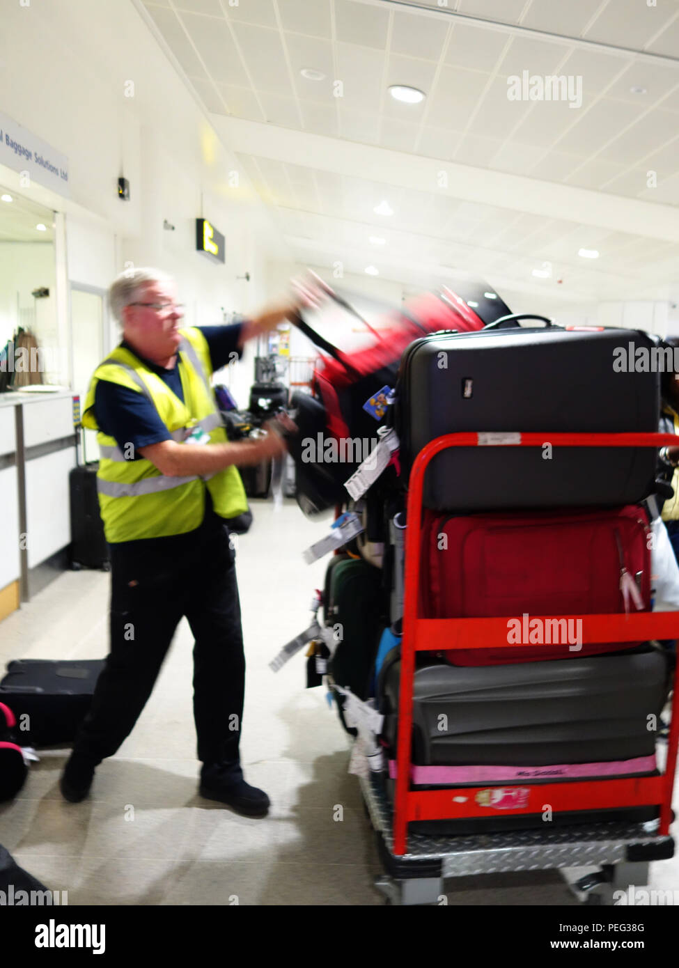 Baggage handler hand loading lost baggage using the facilities at the arrivals Manchester International Airportat Manchester International Airport - Stock Image