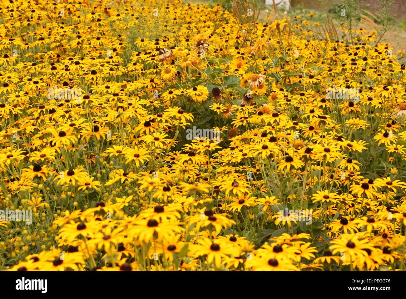 Blühendes Blumenbeet im Zentrum von Xanten - Stock Image