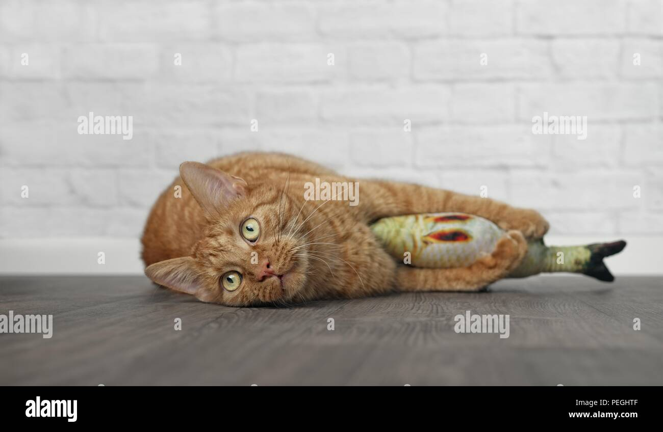 Cute ginger cat lying down and hugging a fish Toy. - Stock Image