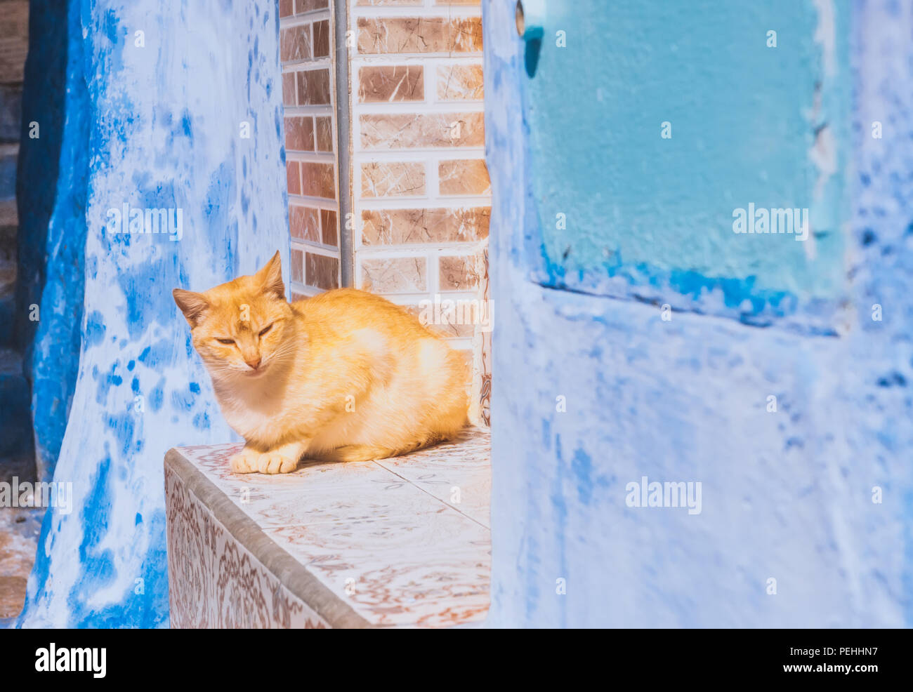 Beautiful stray cat sleeps on the streets of Morocco Stock Photo