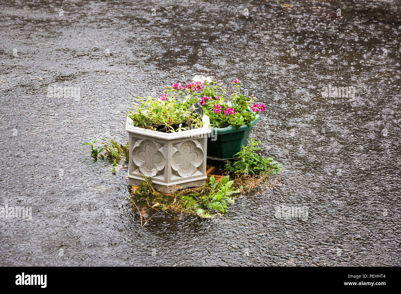 Flash flooding of private courtyard garden in July in UK - Stock Image