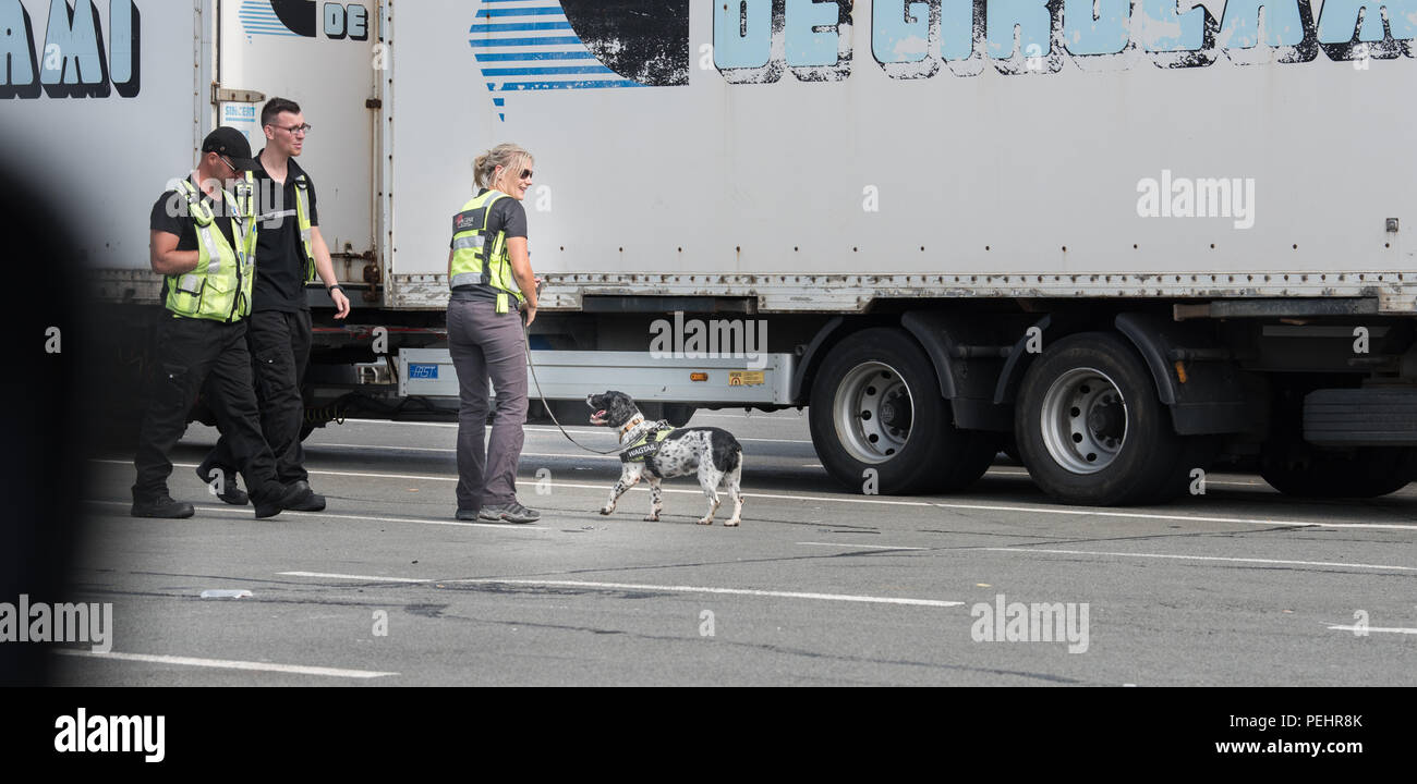 Sniffer dog and handler crew about to  examine a lorry at the port of Calais, France, for illegal immigrants. - Stock Image