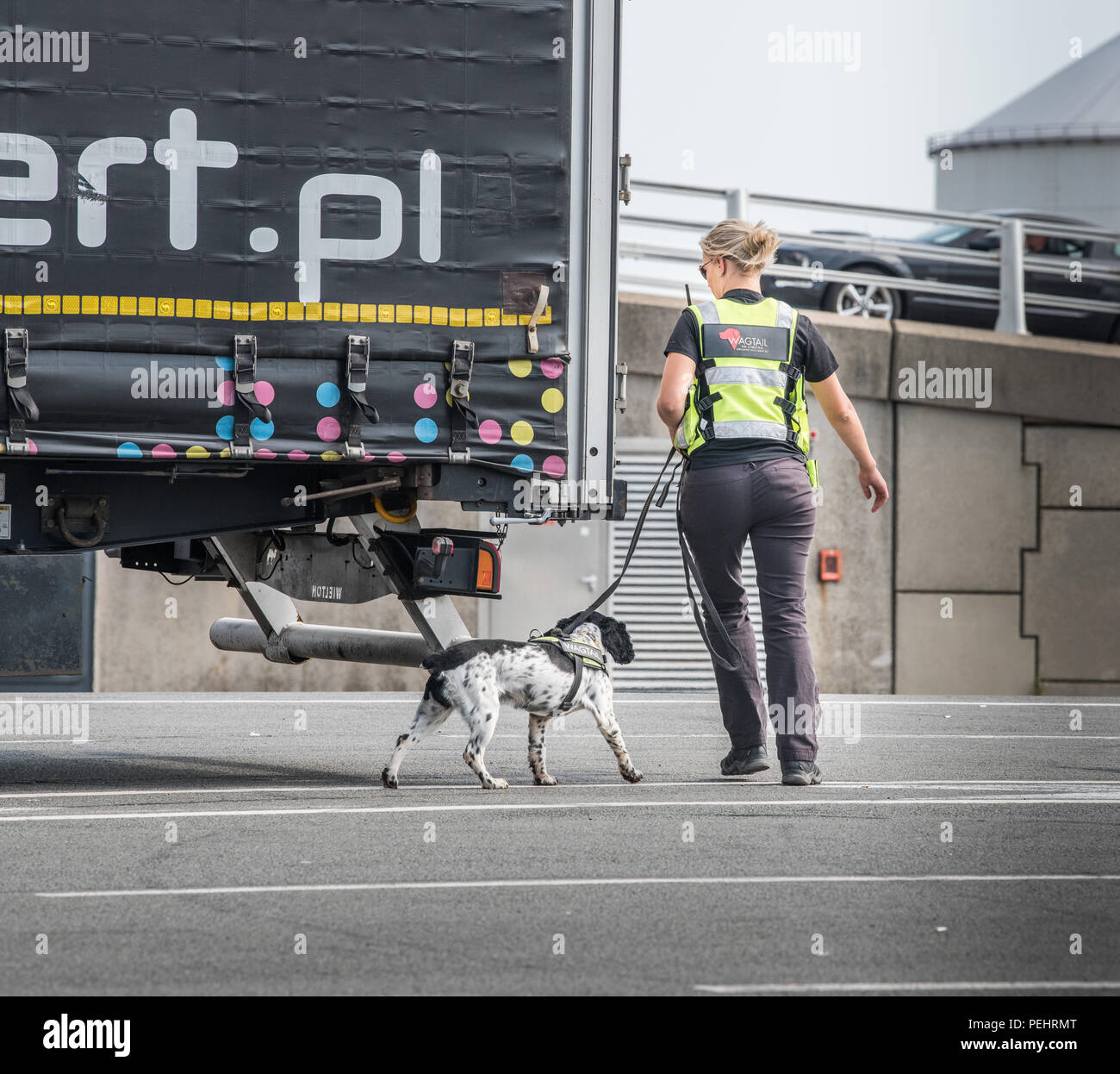 Sniffer dog and handler examine the rear of a lorry at the port of Calais, France, for illegal immigrants. - Stock Image