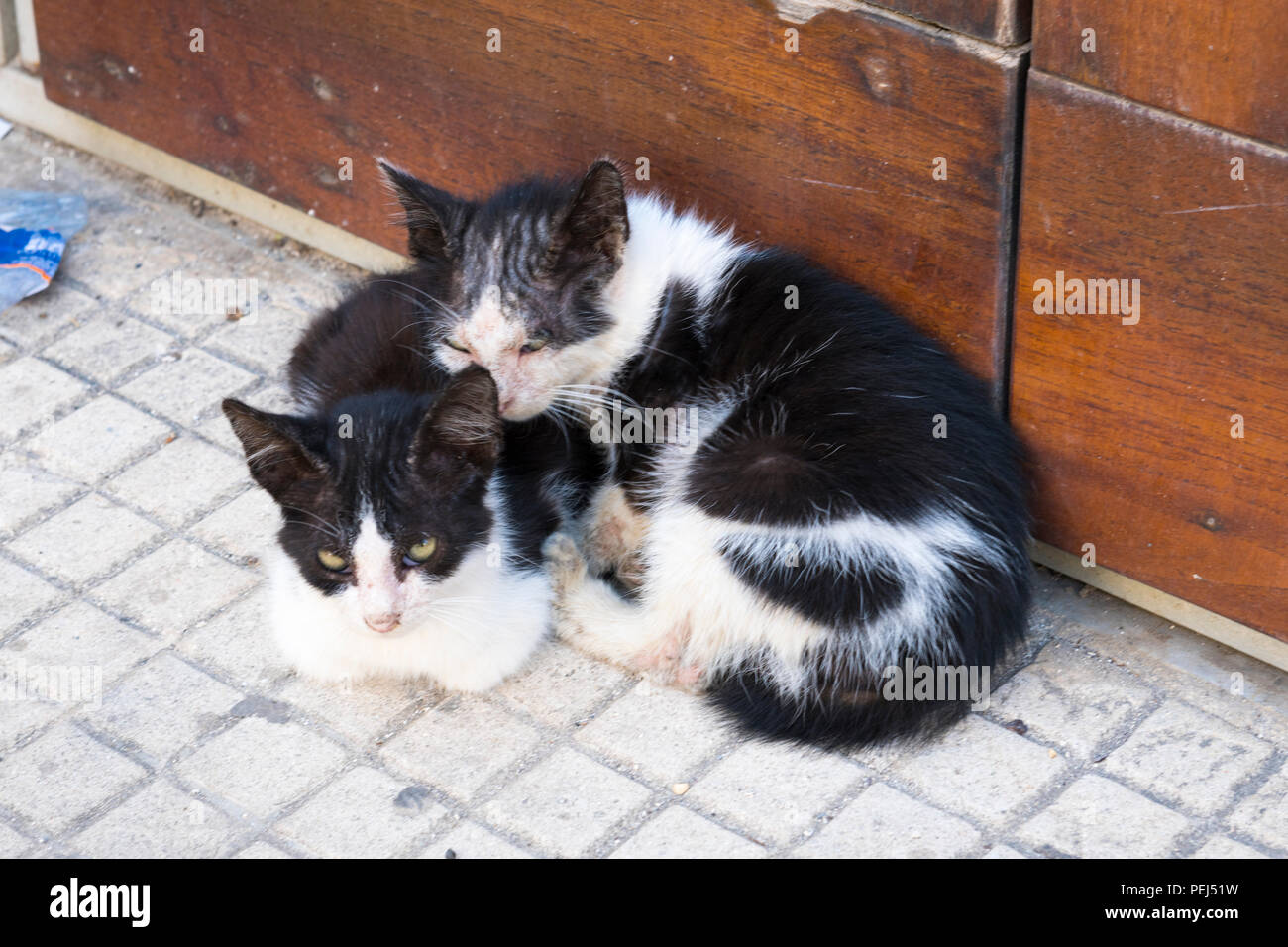 Italy Sicily Syracuse Siracusa Ortygia Two Sweet Cute Baby Cats
