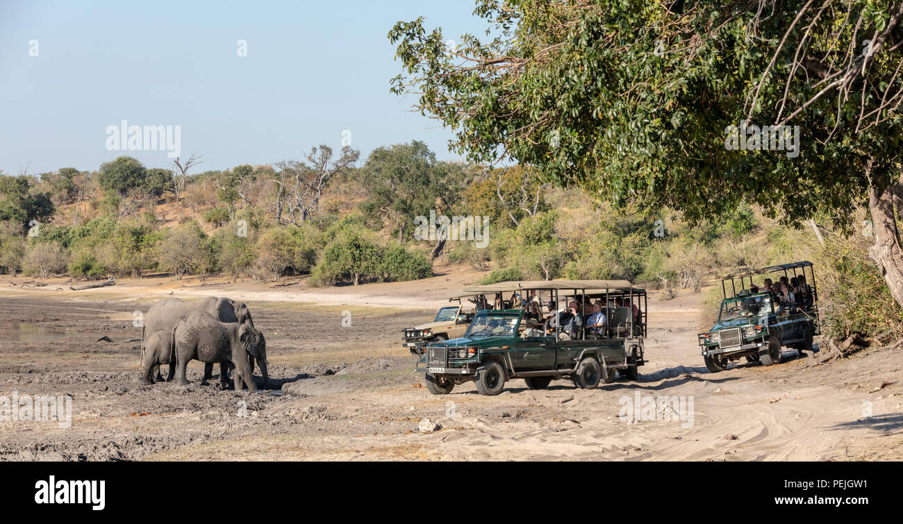 African elephants observed by a herd of safari goers, Chobe National Park, Botswana - Stock Image