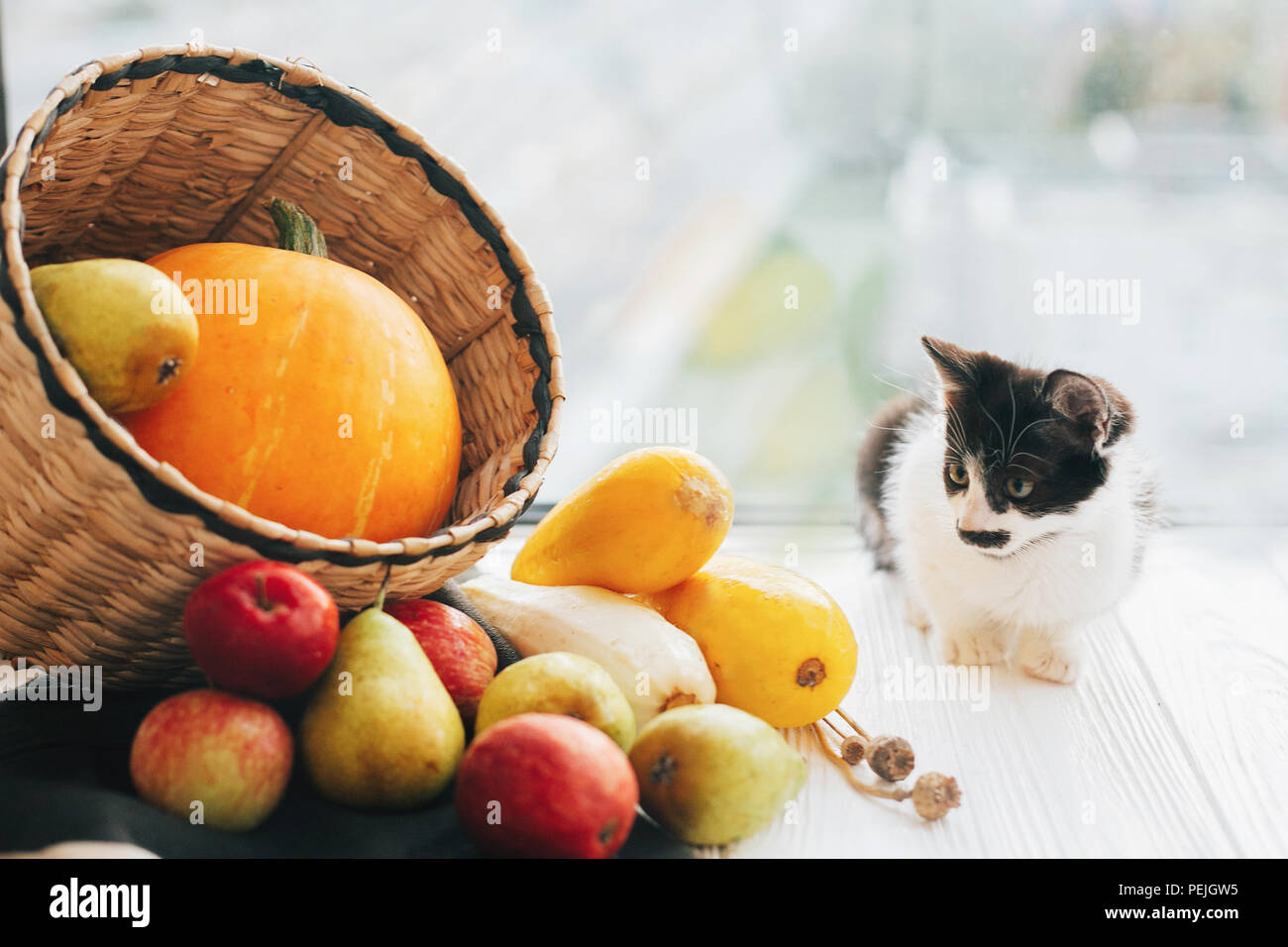 Happy Thanksgiving And Halloween Harvest Hello Autumn Concept With Space For Text Adorable Kitty Sitting At Pumpkin Zucchini Apples Pears