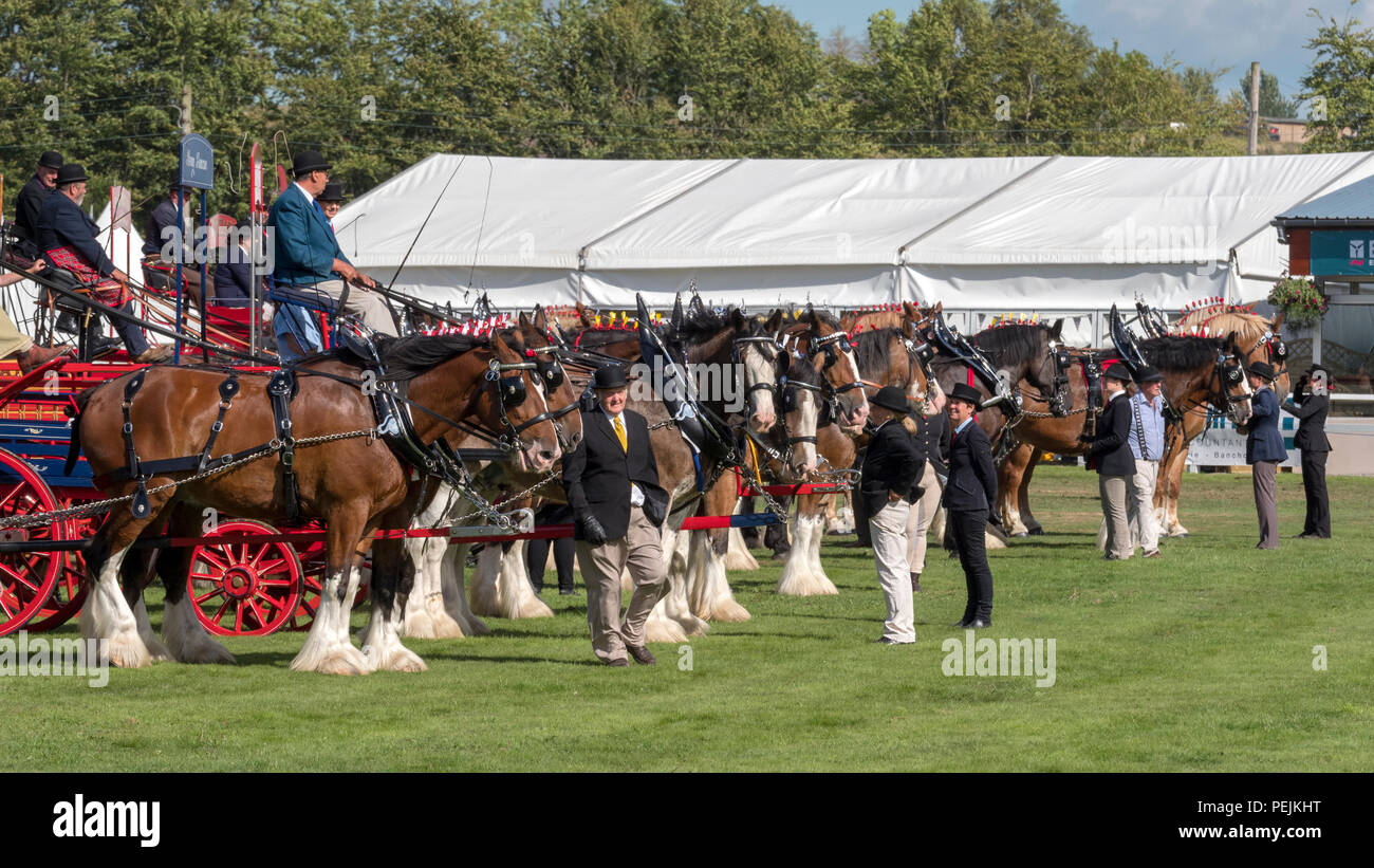 Turriff, Scotland - Aug 06, 2018: Display of horses and wagons during the Heavy Horse turnout at the Turriff Agricultural Show in Scotland. - Stock Image
