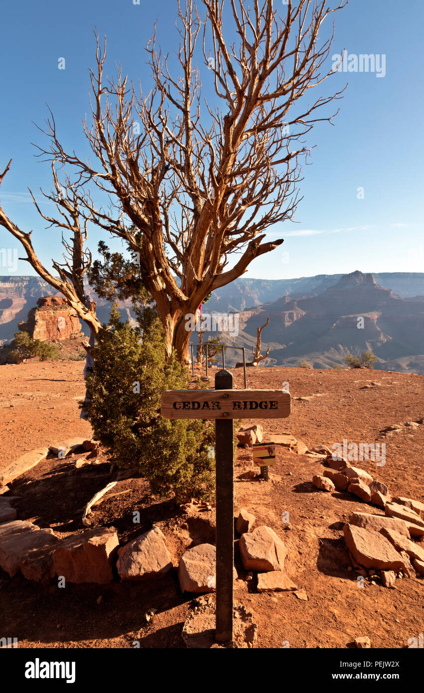 AZ00281-00...ARIZONA -Cedar Ridge, a popular rest stop and turn around point along the South Kaibab Trail in Grand Canyon National Park. - Stock Image