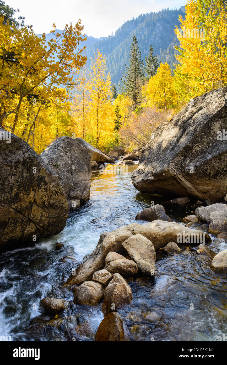 Water flows swiftly down the West Fork of the Carson River in Hope Valley, California as colorful autumn aspen trees line the river. - Stock Image