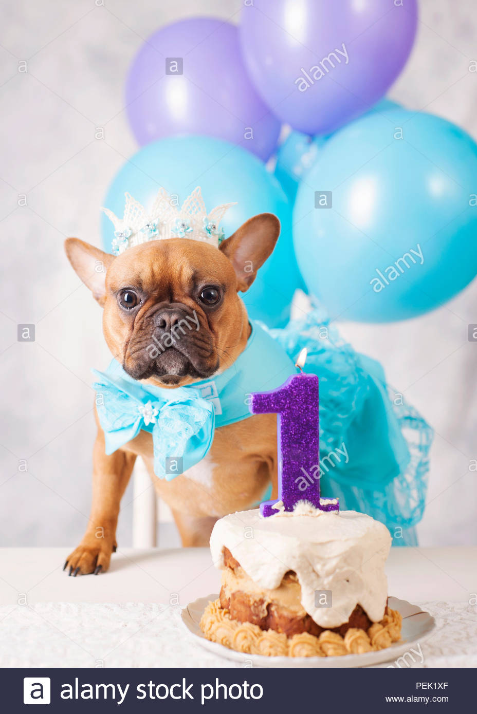 Red Fawn French Bulldog Celebrating First Birthday With Cake Candle Balloons Gown And