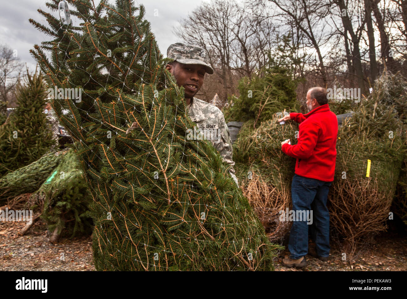 Christmas Tree Growers Association Stock Photos & Christmas Tree ...