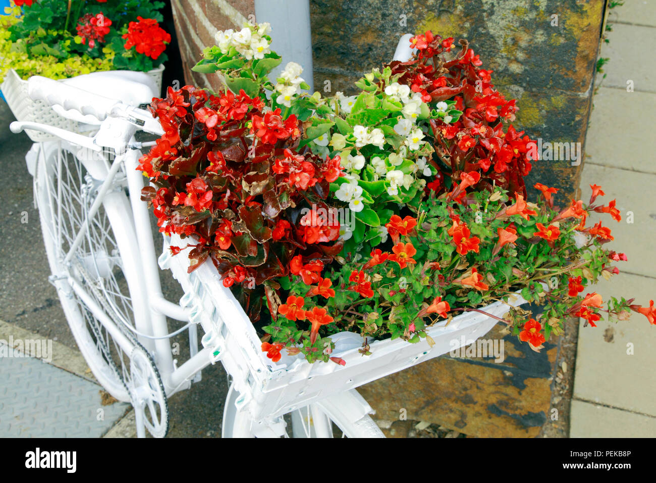 Hunstanton in Bloom, unusual plant container, white painted bicycle, bedding plants Stock Photo