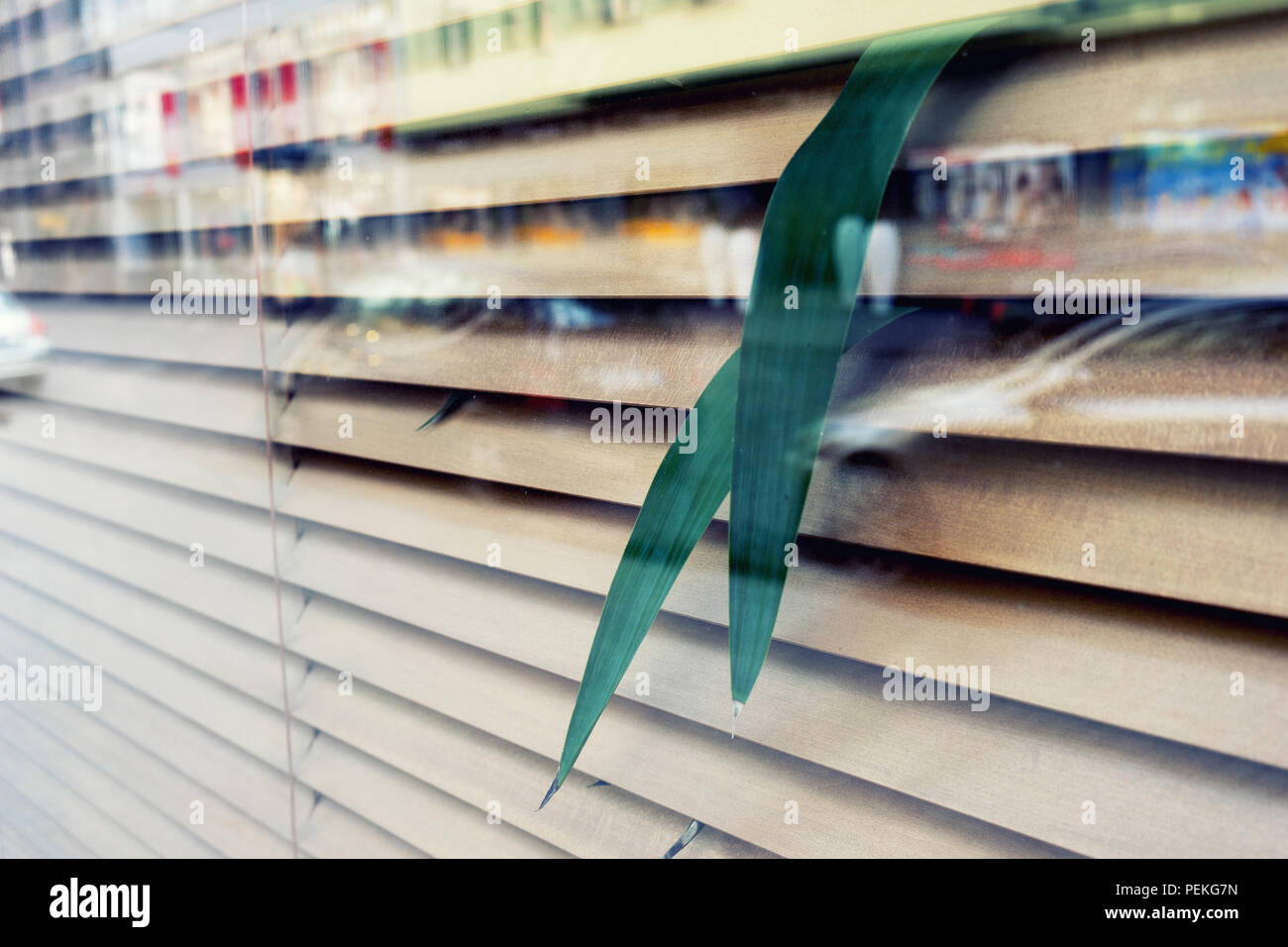Reflection of city in the window with shutters with plants Stock Photo