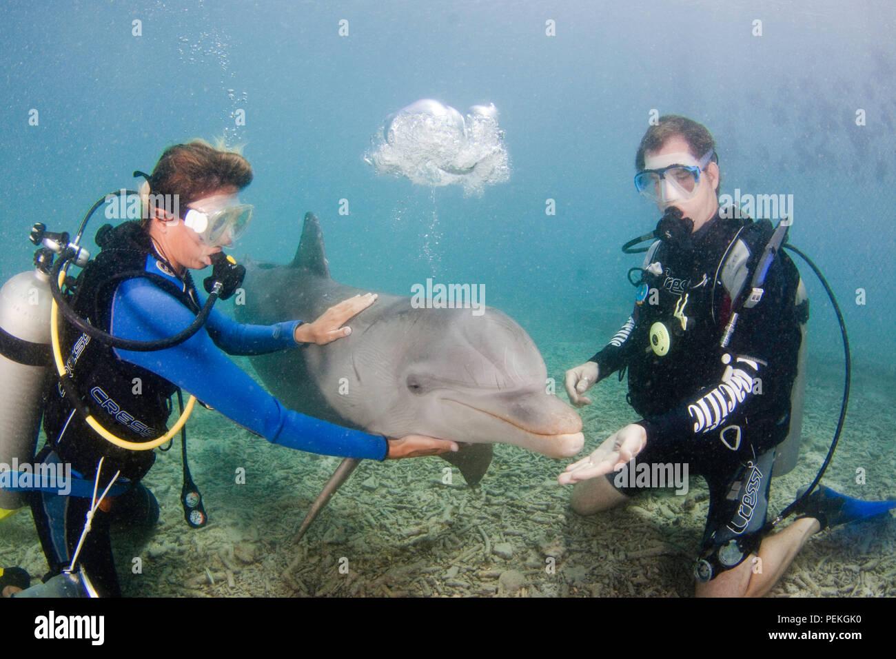 Couple (MR) and bottlenose dolphin, Tursiops truncatus, Curacao Sea Aquarium, Curacao, Caribbean. - Stock Image