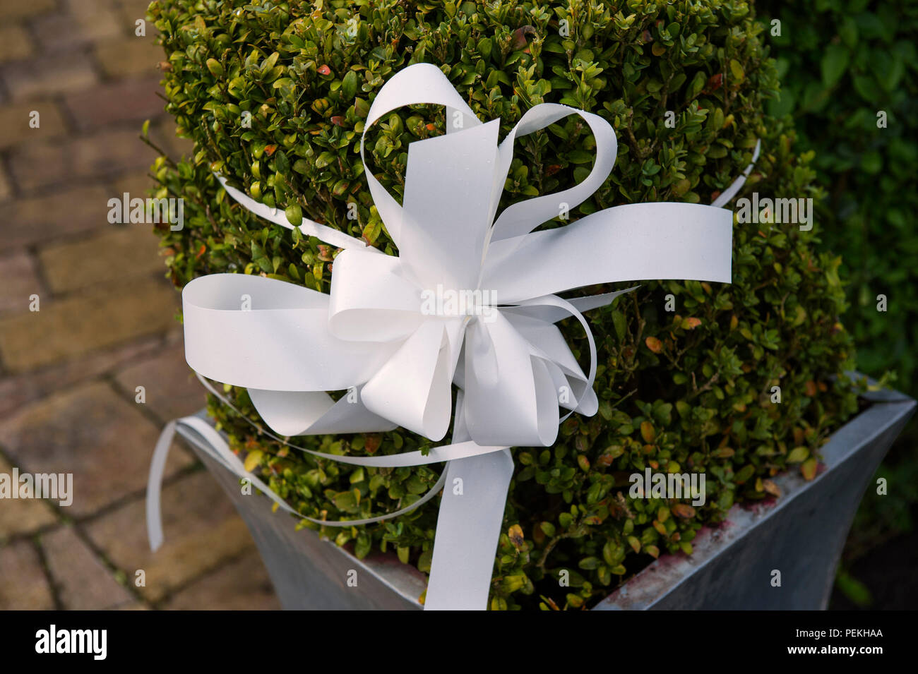 Wedding Day Topiary High Resolution Stock Photography And Images Alamy
