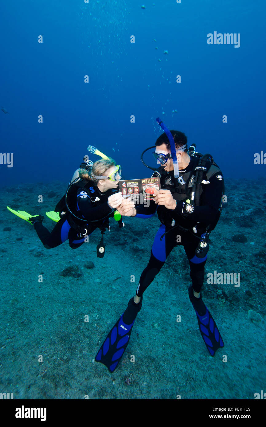 Divers (MR) on a reef reading a fish identification book underwater.  Palau, Micronesia. - Stock Image