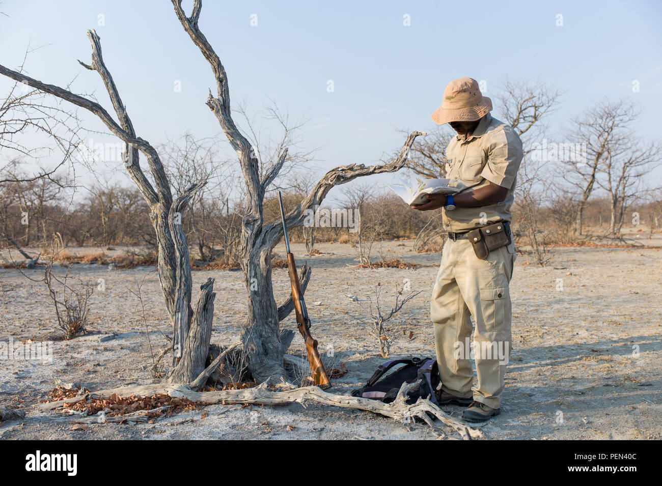 A ranger guides a bush walk and identifies trees in Ongava Game Reserve, Kunene Region, Namibia. - Stock Image