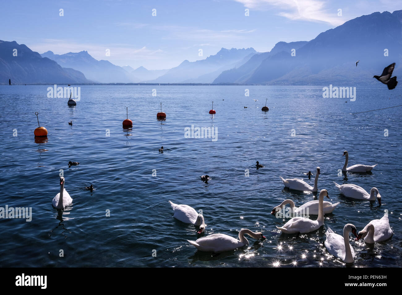 Landscape view of Léman lake near Vevey in Switzerland, with the Alps in the background - Stock Image