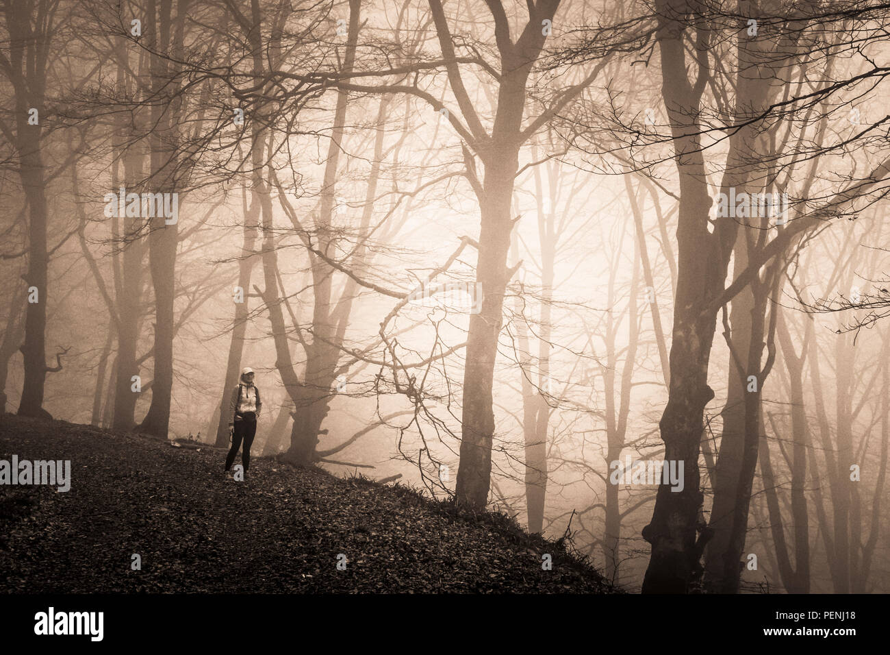 Woman in a beechwood. - Stock Image