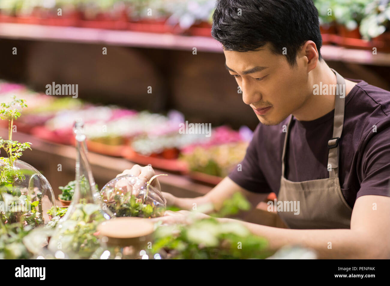 Young man working in plant shop - Stock Image