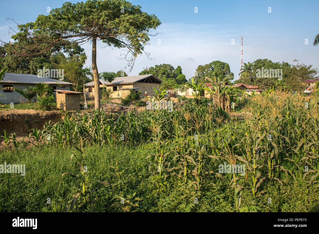 A farm in Ganta, Liberia - Stock Image