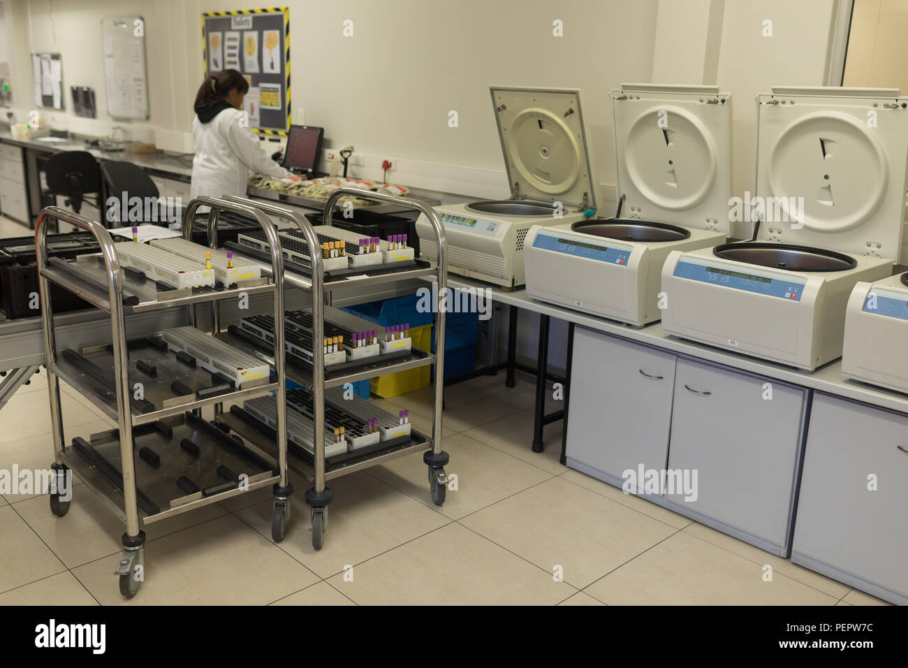Laboratory technician working in blood bank - Stock Image
