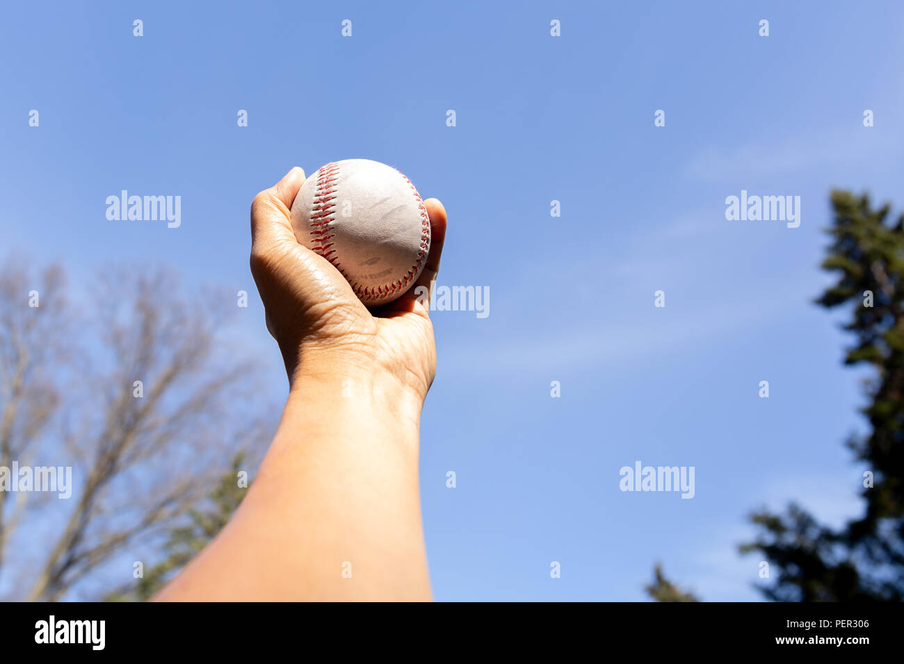 Hand holding baseball against blue clean sky with tree. - Stock Image