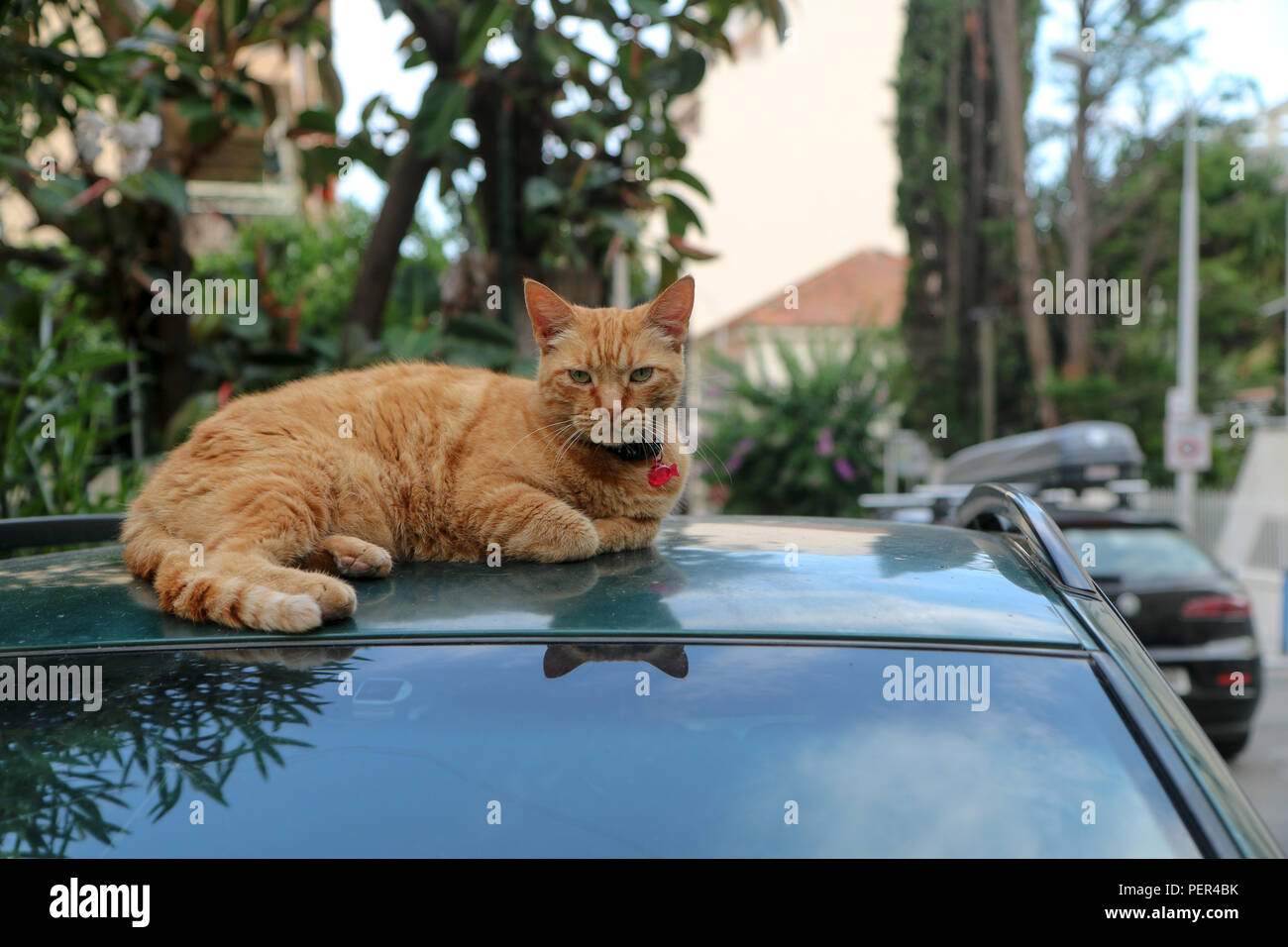 A picture of a cat lying on the street on the car´s roof. - Stock Image