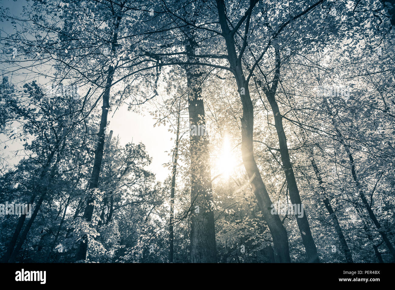 Monochrome forest in a sunny day. depressing nature. - Stock Image