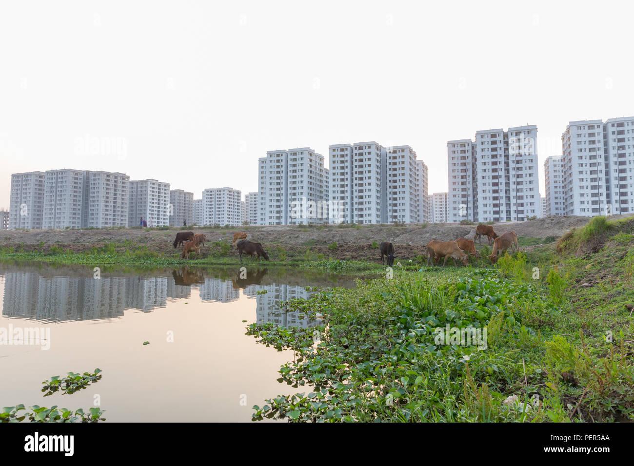 Desparate Urbanigation, Dhaka, Bangladesh - Stock Image