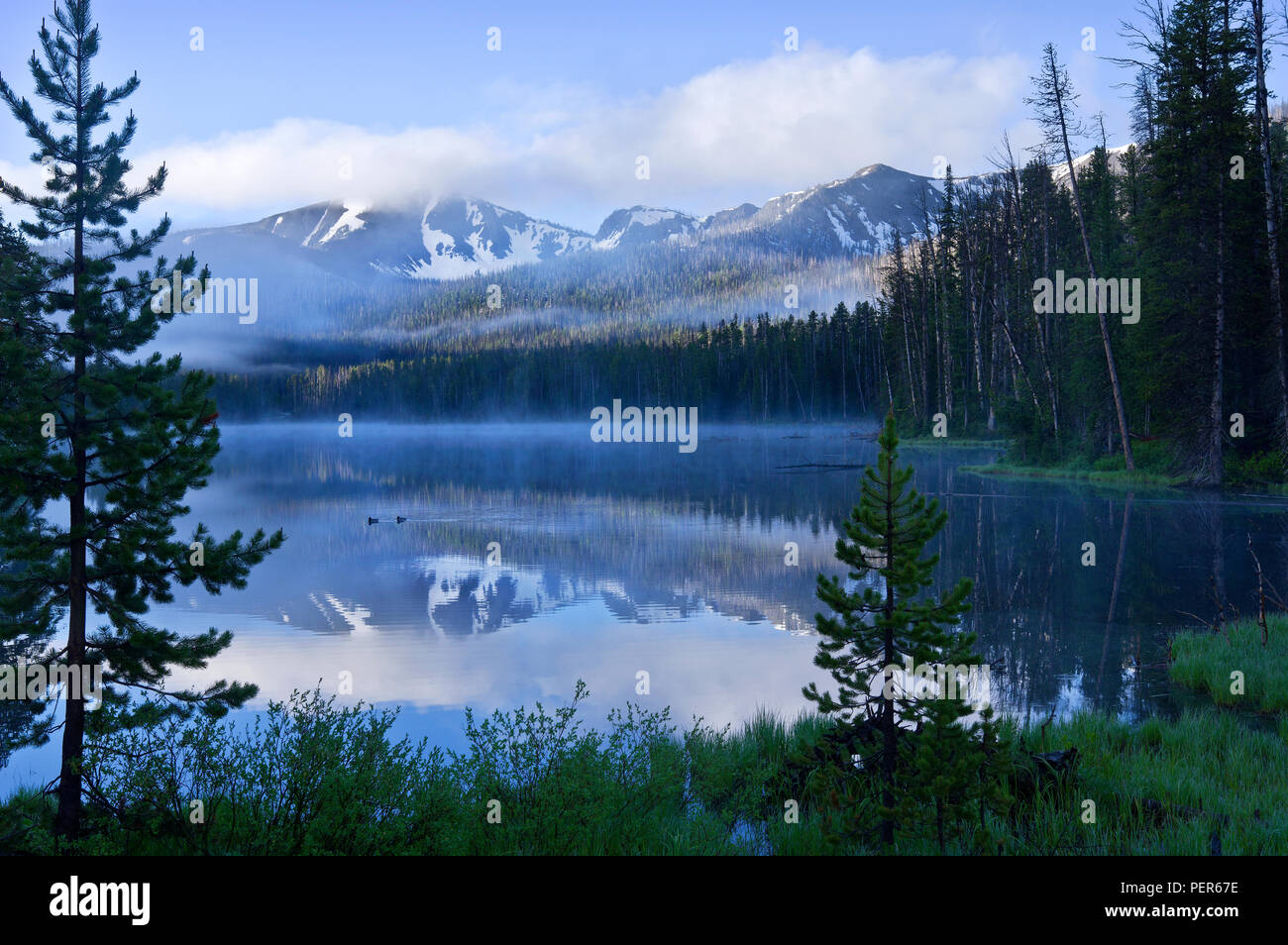 Sylvan Lake in Yellowstone National Park on a misty dawn morning, with ducks swimming in the lake and reflections of mountains. - Stock Image