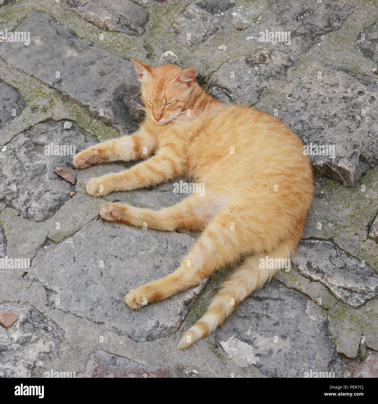 Contented cat in Kotor, Montenegro. The Old town is full of cats which are loved and respected (mostly) by the population. The cat has become the info. - Stock Image