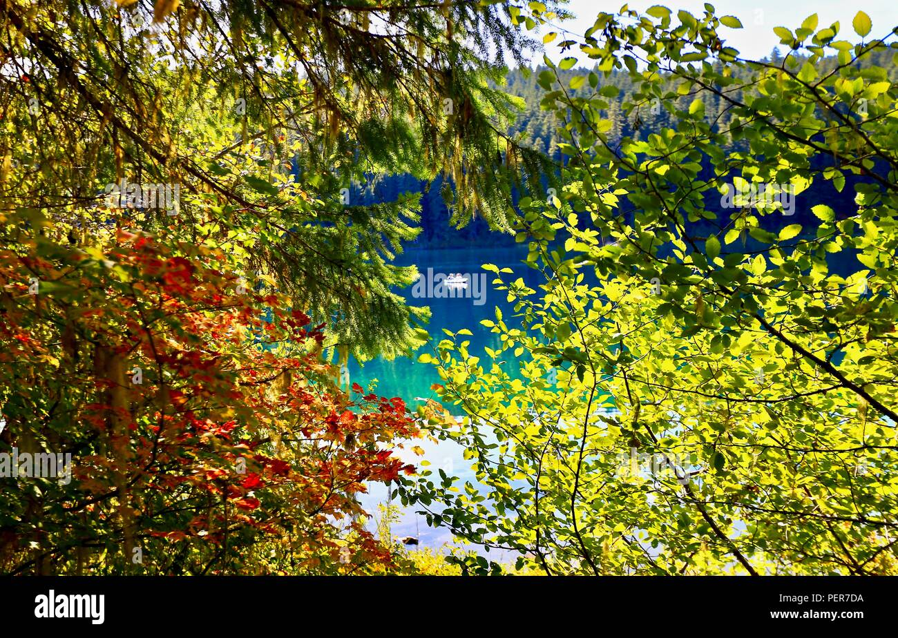 Boaters on lake through fall leaves with evergreen background - Stock Image