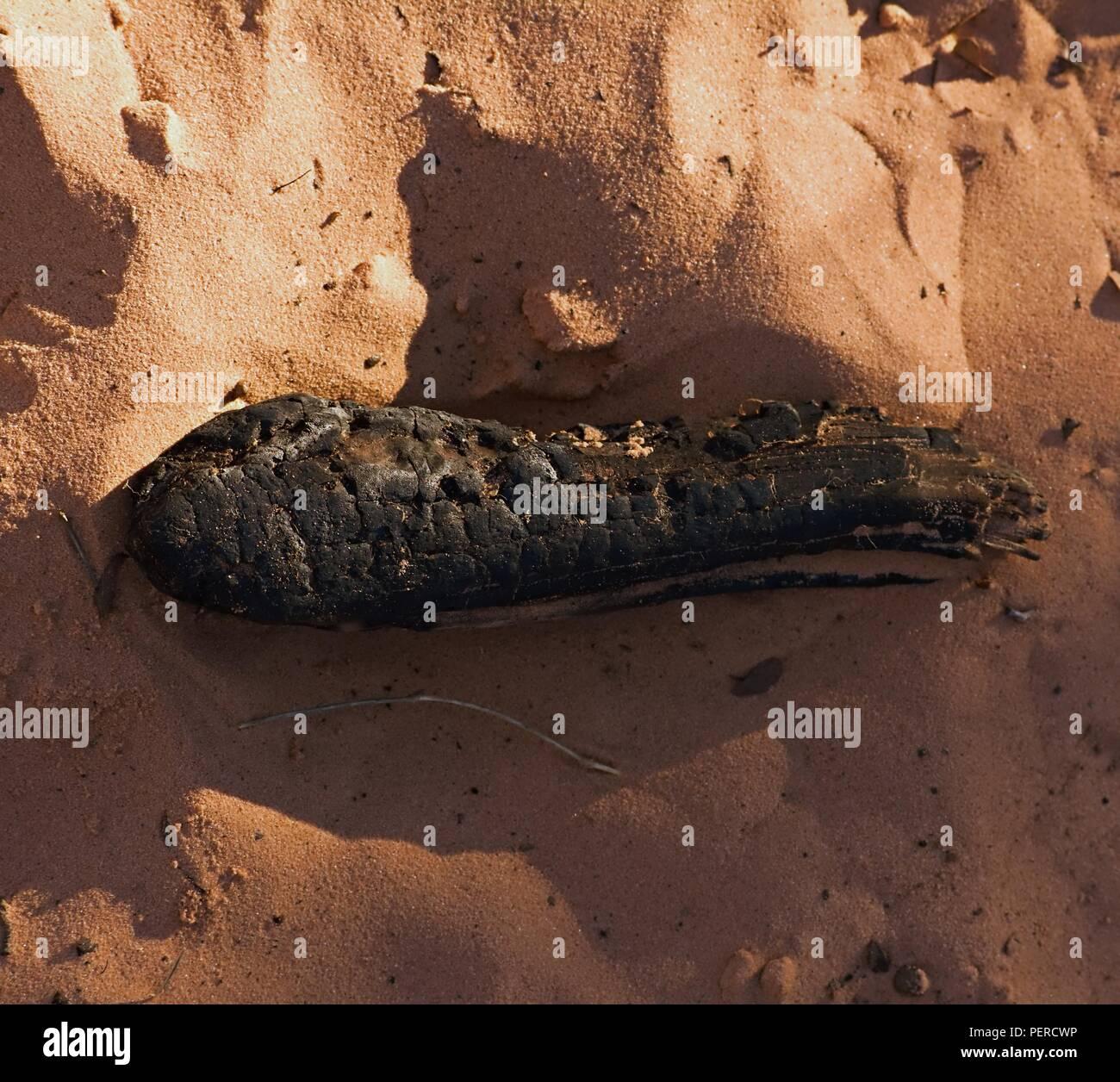 Charred Log on Beach - Stock Image