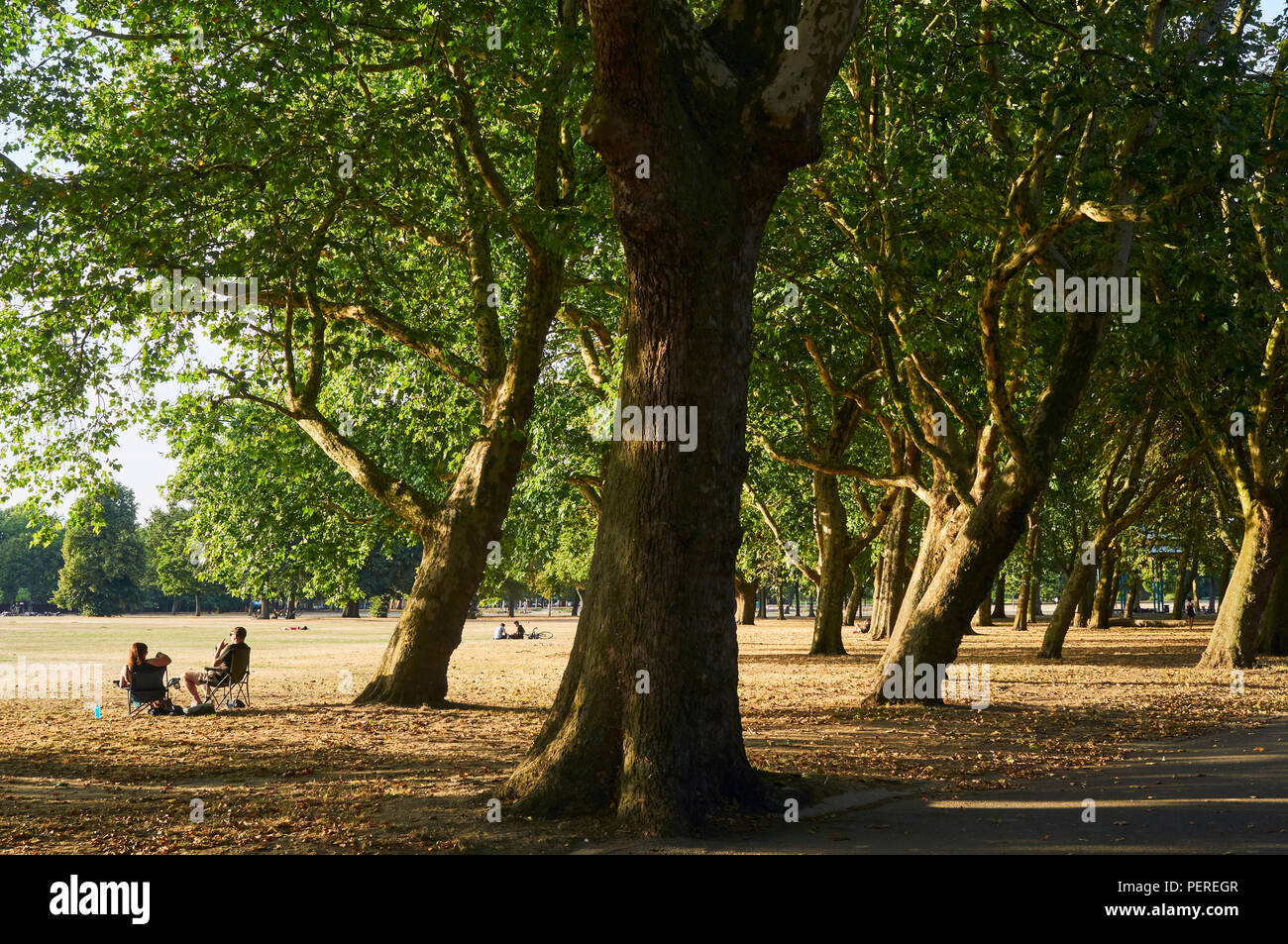 People sitting in the sunshine amongst trees in Victoria Park, East London, UK - Stock Image