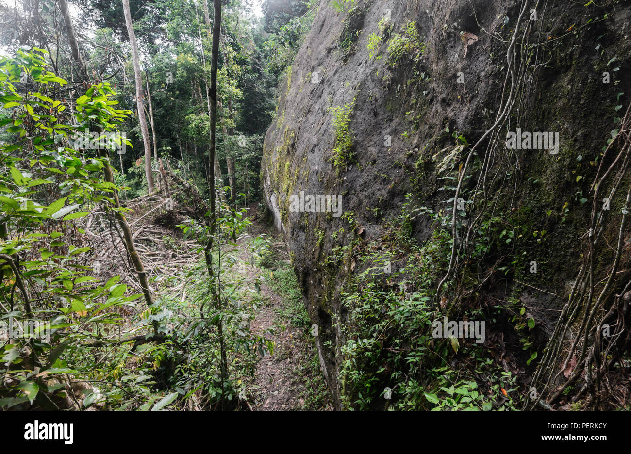 Coffin Cliff where the Sugpan ethnic group used to bury their ancestors, Danum Valley Conservation Area, Sabah, Borneo, Malaysia - Stock Image