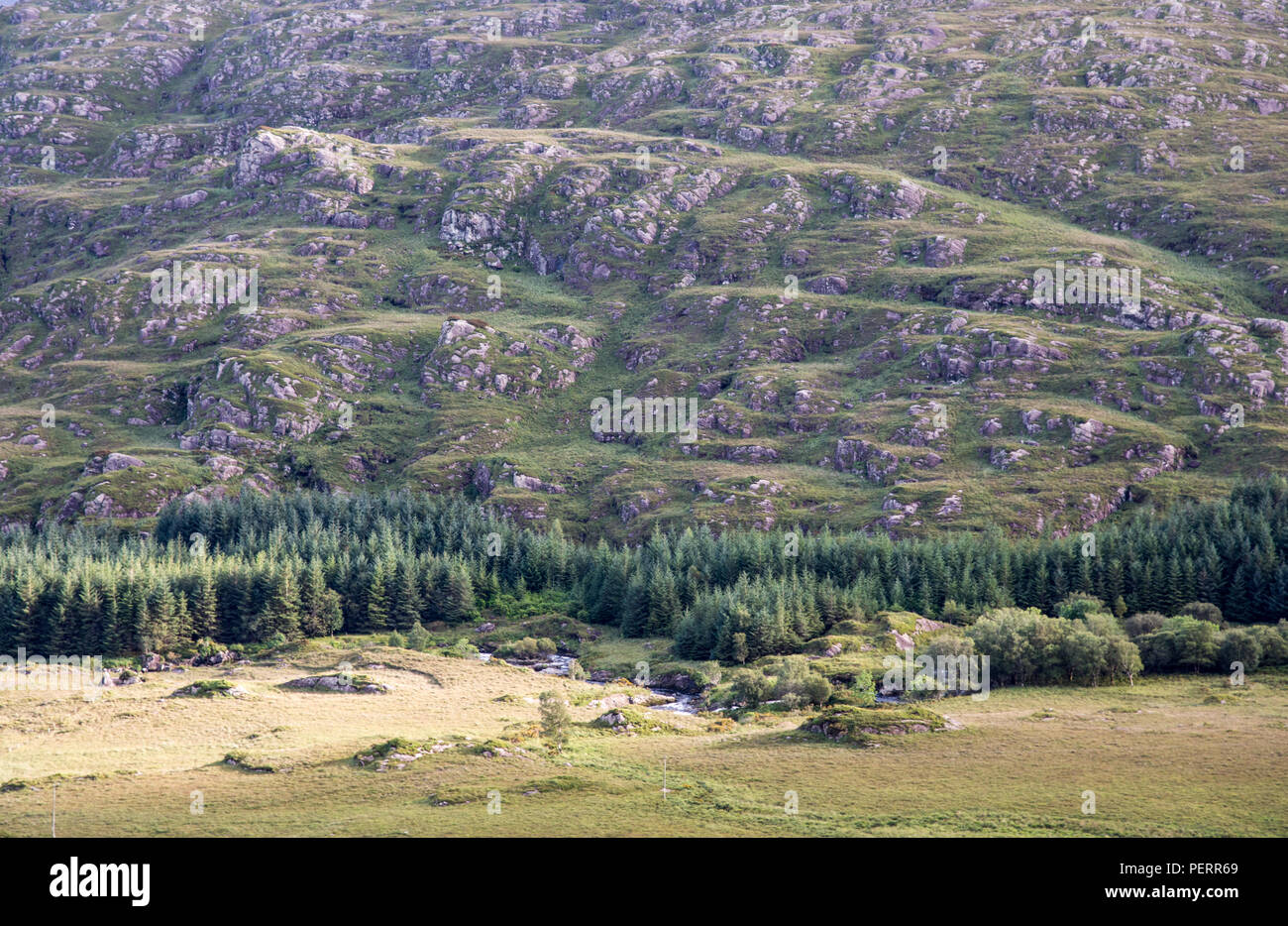 Forestry plantation in the valley floor of the Black Valley, nestled under the Macgillycuddy's Reeks mountains of Ireland's County Kerry. - Stock Image