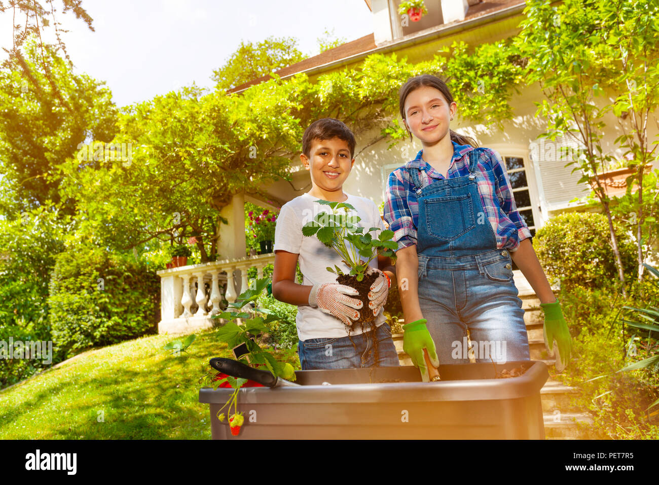 Portrait of happy friends, preteen boy and girl, planting strawberries in container in the backyard at sunny day - Stock Image