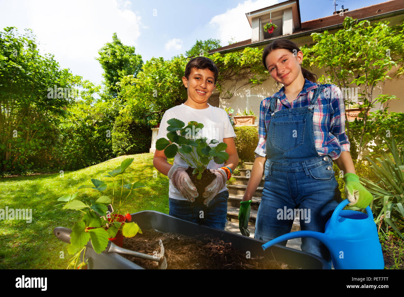 Portrait of preteen boy and girl planting strawberries in containers in the garden at sunny day - Stock Image