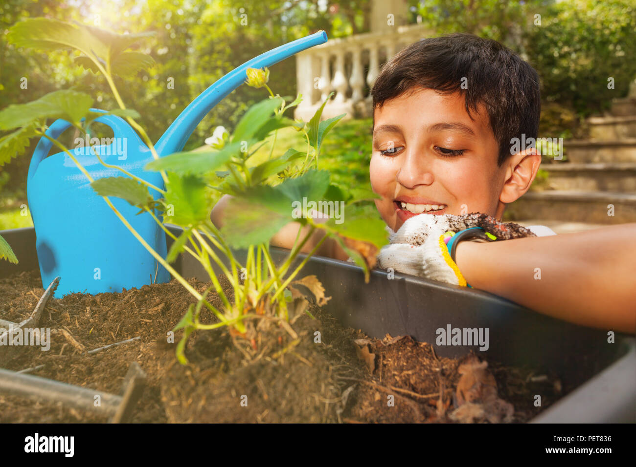 Portrait of preteen boy waiting for his strawberries plant to grow in the pot - Stock Image