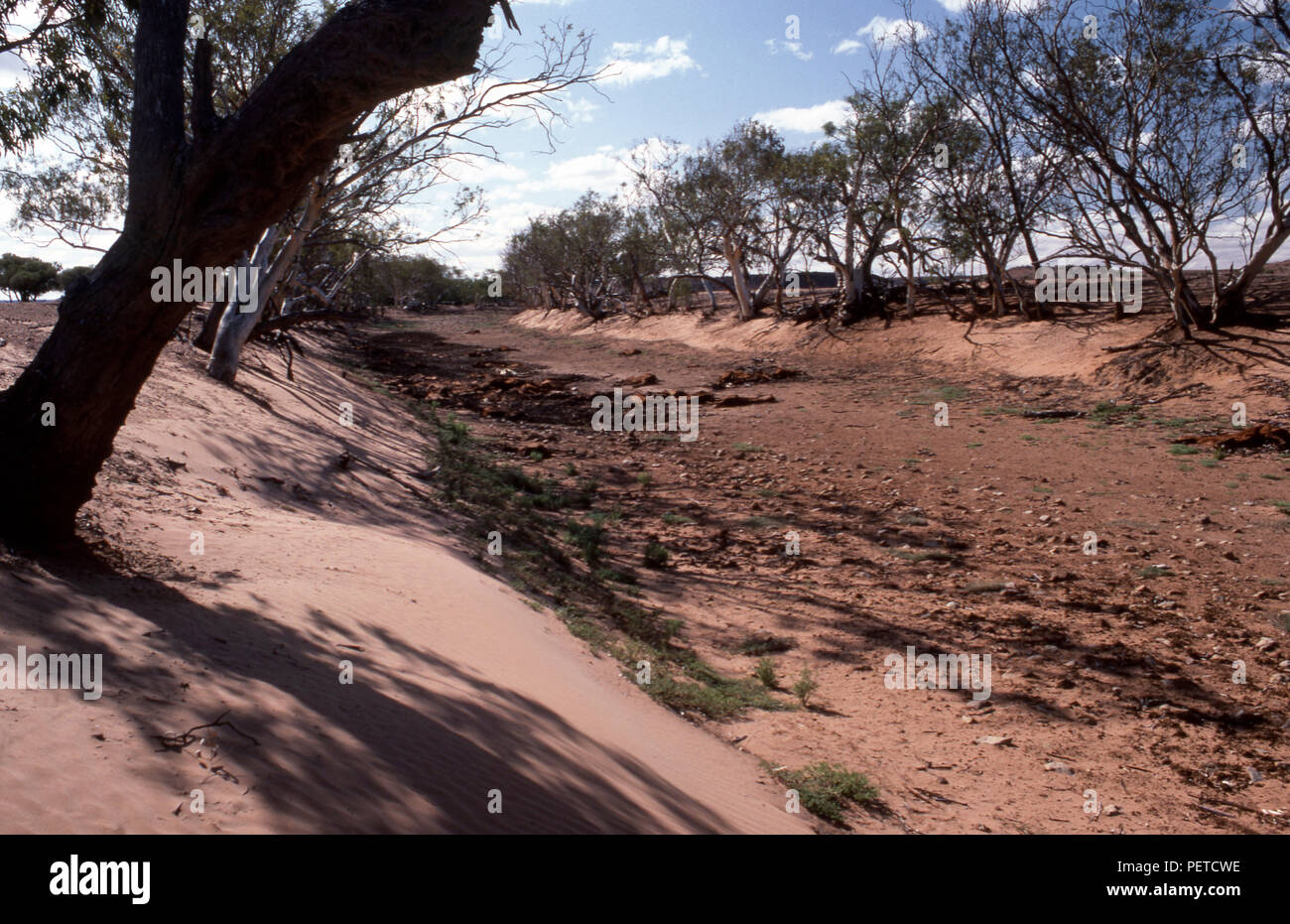 Dry river bed in the Northern Territory and dead livestock owing to severe drought conditions, Australia - Stock Image