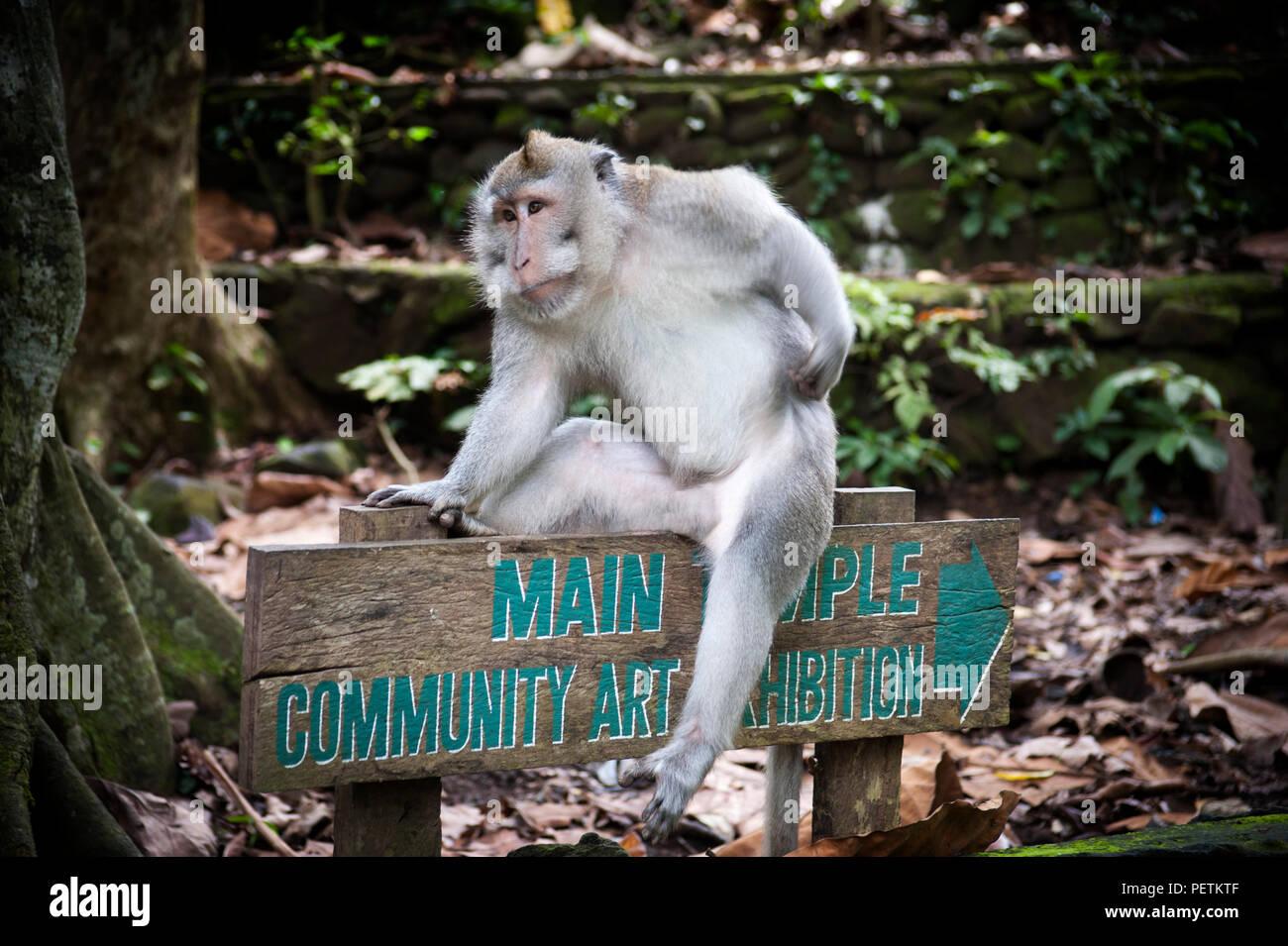 Bali Indonesia: Ubud Monkey Forest - Stock Image