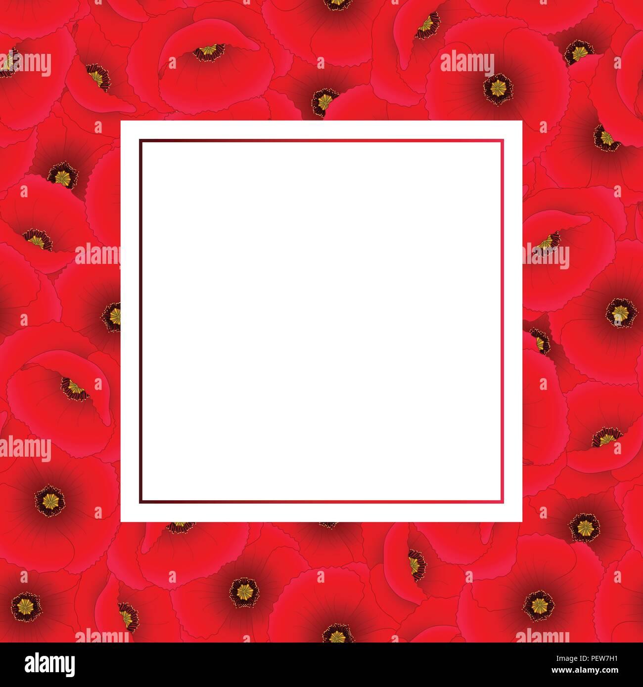 Papaver rhoeas Banner Card or common poppy,corn poppy,corn rose,field poppy,Flanders poppy or red poppy. Vector Illustration. - Stock Vector