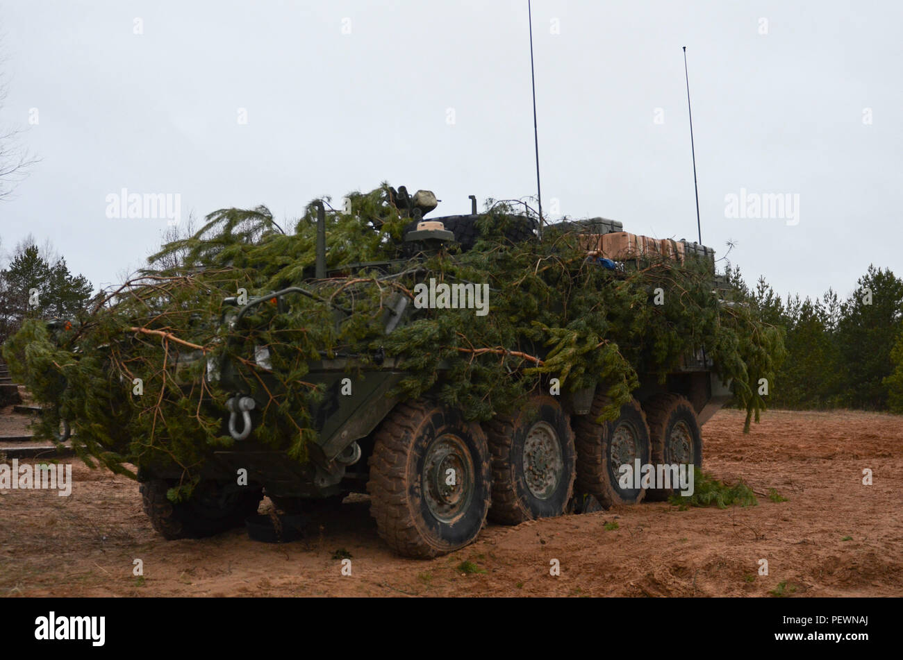 An M1129 Mortar Carrier Vehicle is camouflaged with pine branches to blend in with the surroundings during a night training exercise, which was held by the Soldiers of 3rd Squadron, 2nd Cavalry Regiment, stationed out of Vilseck, Germany, at Adazi Training Area in Latvia, Feb. 3, 2016. (Photo by U.S. Army Staff Sgt. Steven M. Colvin/Released) - Stock Image