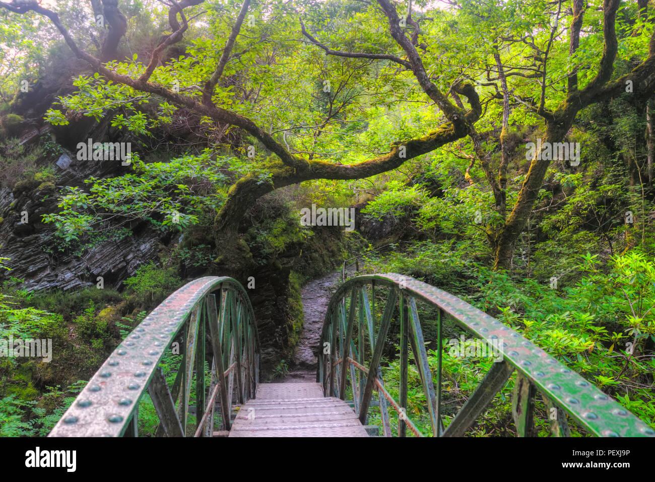 a walk in the forest .. near Devil's Bridge...Wales - Stock Image