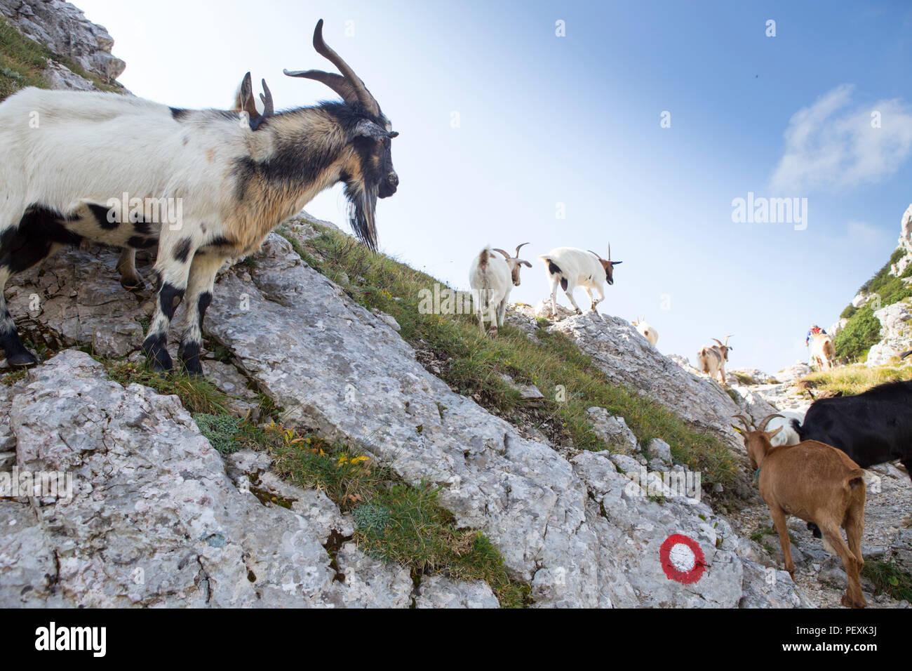 Vratca pass near Mount Vogel, Triglav National Park, Slovenia - Stock Image