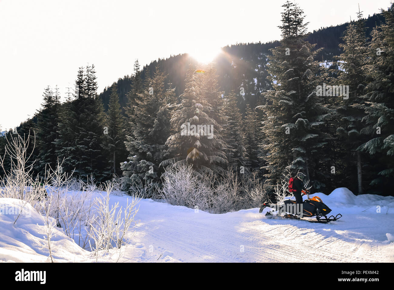 Man with snowmobile near forest, Callaghan Valley, Whistler, British Columbia, Canada - Stock Image